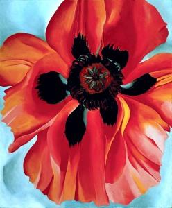red-poppy-vi