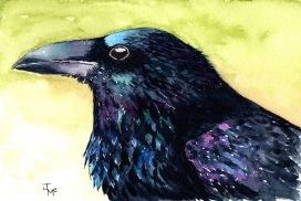 Crow Hi Res