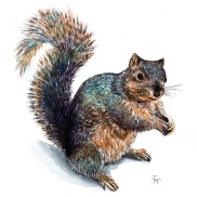 Jenny's Squirrel HiRes