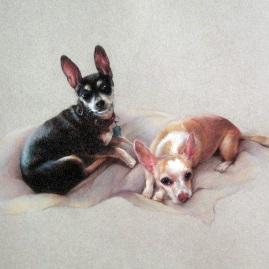 Pet Portraits in Pastel Pencil